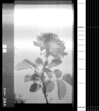 Fleur_1